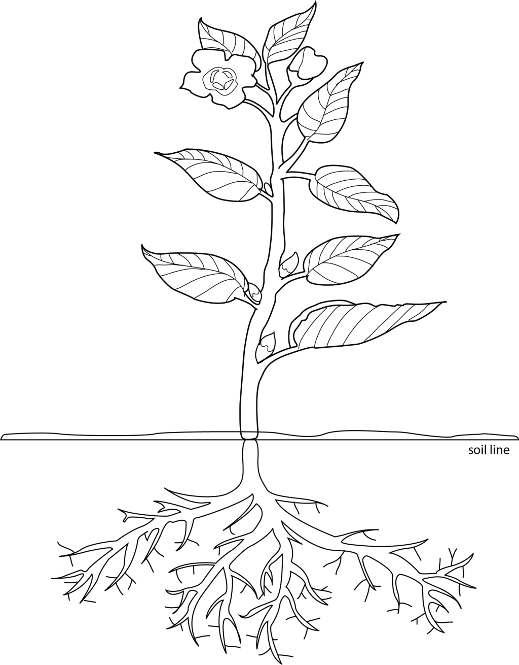 Flower With Roots Drawing