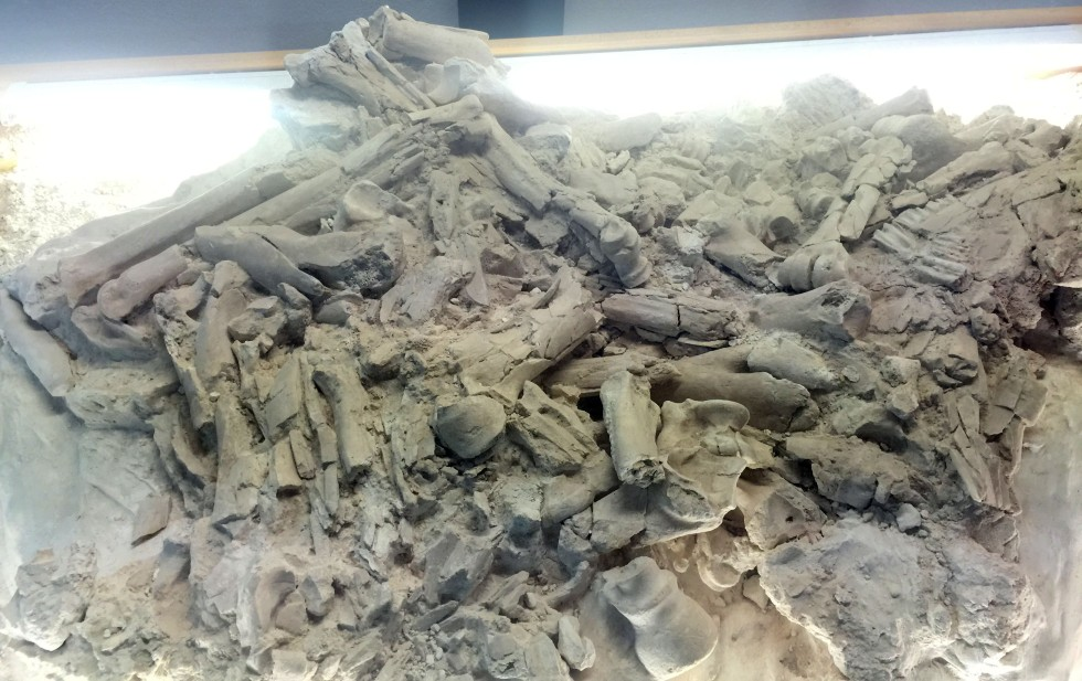 This is a cast of a pile of fossilized skeletal remains that were found in this area. It is unusual to find a pile from many different species as was found here.