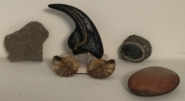 My fossil collection: some like jewelry, some like fossils (the claw is a plaster cast).